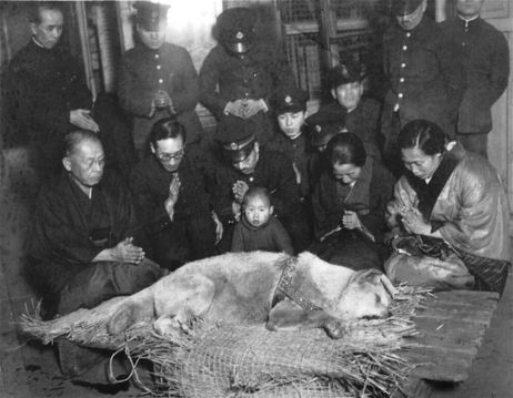 hachi funeral