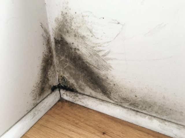 How To Detect Mold and When to Hire a Professional
