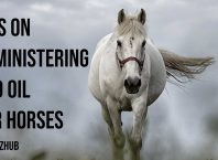 Tips on Administering CBD Oil for Horses