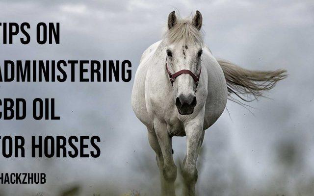 Tips on Administering CBD Oil for Horses