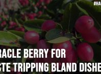 Miracle Berry for Taste Tripping Bland Dishes