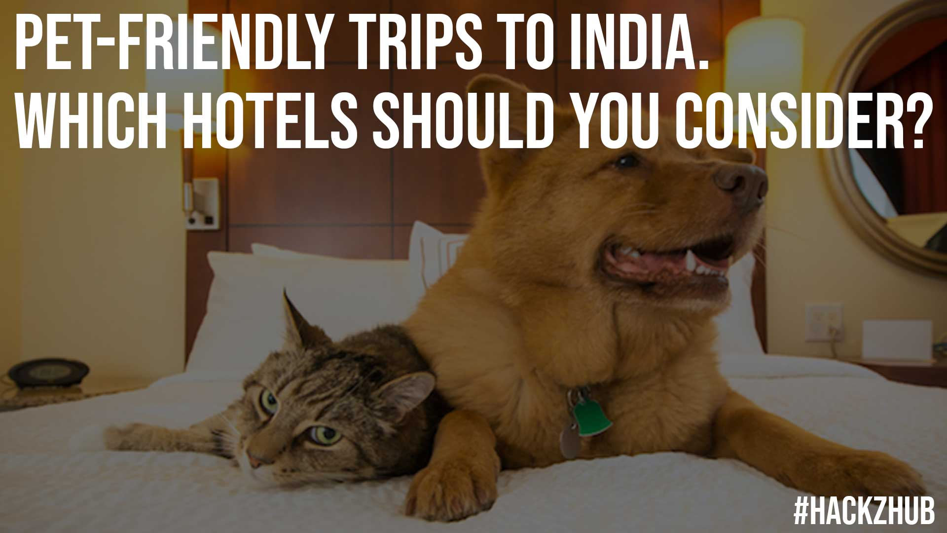 Pet Friendly Trips To India Which Hotels Should You Consider